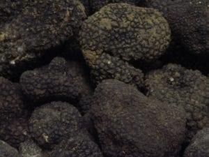 Tartufo di Norcia, tartufo nero pregiato